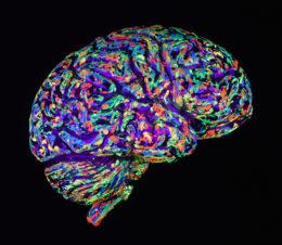 Neuroscience-Addiction